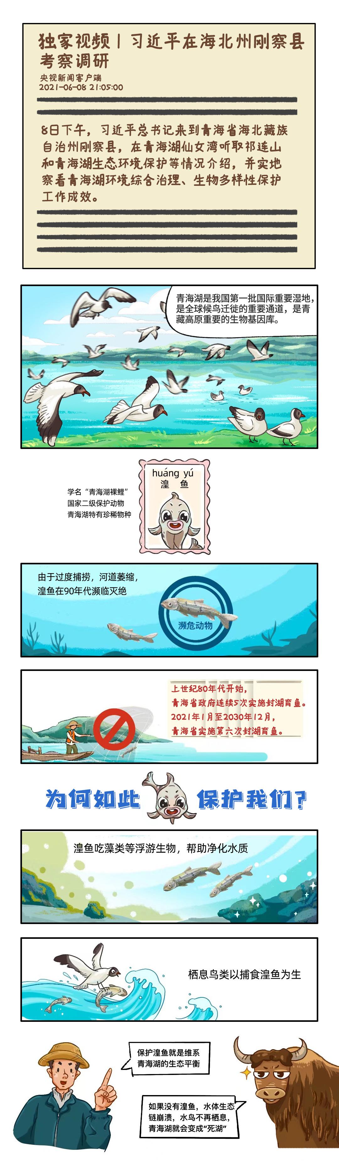时政图解丨小湟鱼为你解锁青海湖生态密码